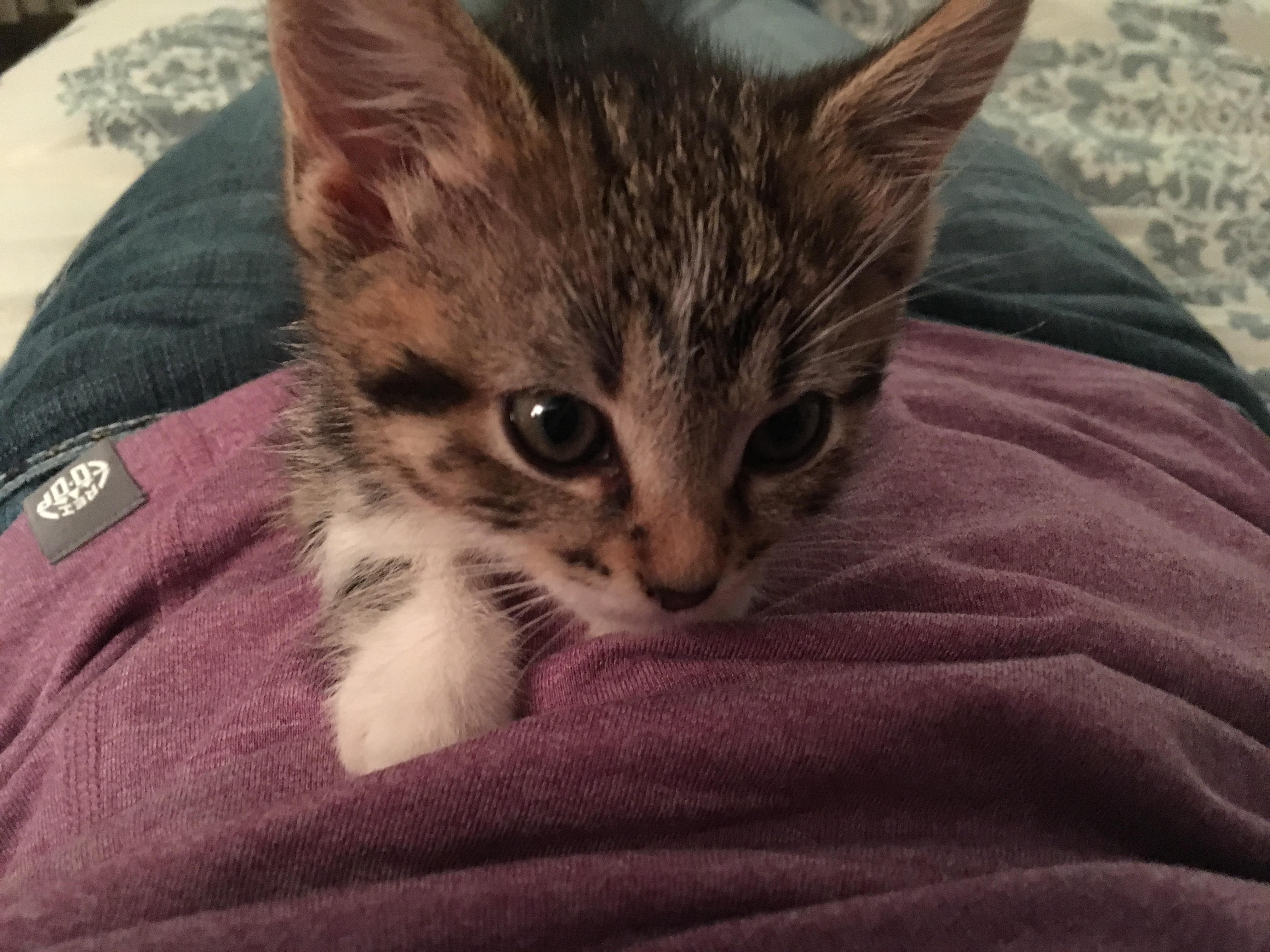 Welcome Lulu!